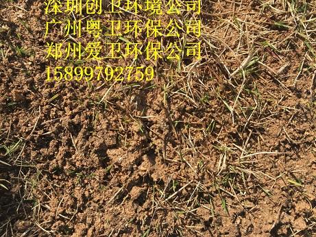 深圳红火蚁防治公司治理红火蚁的三种方法