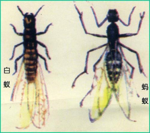 深圳白蚁防治公司对于白蚁的认识