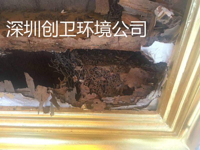 深圳灭白蚁公司防治白蚁用药的规范性