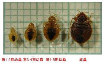 深圳杀臭虫公司科学认识吸血虫 公司新闻