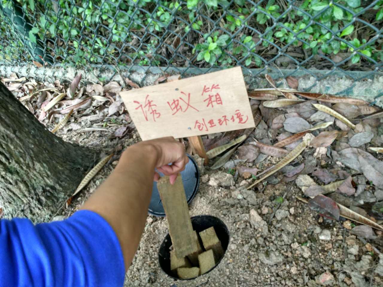 深圳防白蚁公司论家庭装修白蚁防治的必要性