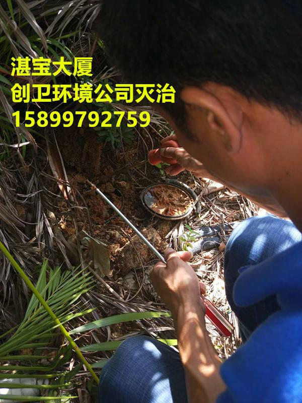 深圳灭白蚁公司科学认识白蚁的习性
