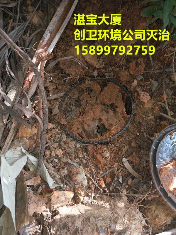 深圳灭白蚁公司对于物业防治白蚁的配合