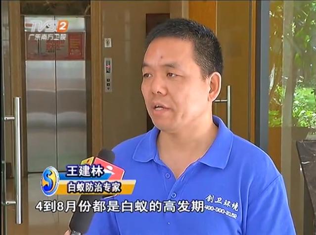 白蚁危害大 深圳防白蚁公司科学预防是关键