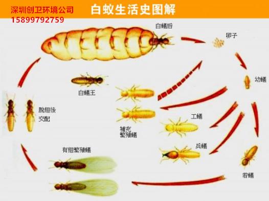 深圳防白蚁公司对于白蚁的认识