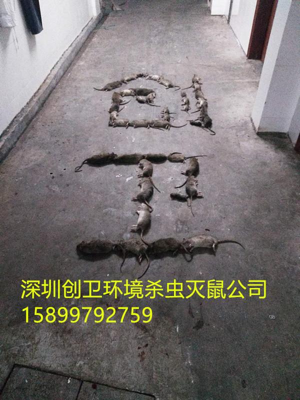 深圳消杀四害公司是怎么样灭跳蚤的