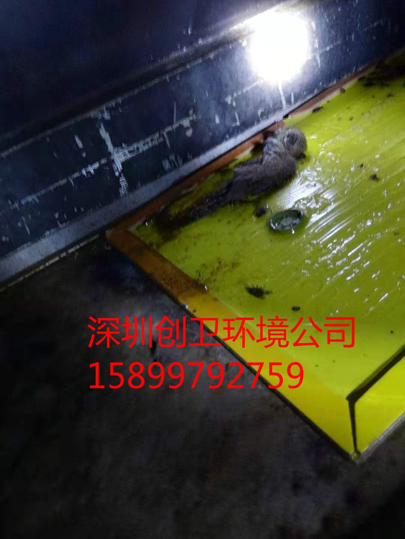 深圳灭鼠公司几种实用灭老鼠方法