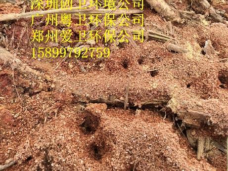 深圳杀虫公司专业灭红火蚁 公司新闻