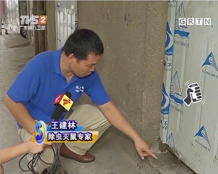 深圳灭鼠公司对于城市老鼠的认识