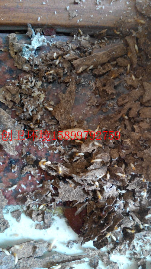 深圳消杀公司关于防白蚁的几点认识