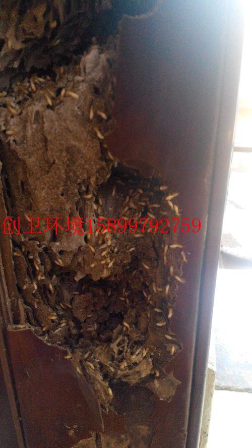深圳防白蚁公司对于城市白蚁防治法规的理解